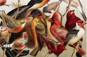 WB artificial birds #2