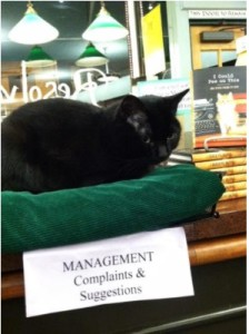 Annie B. the cat #1