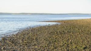 maine beach web small